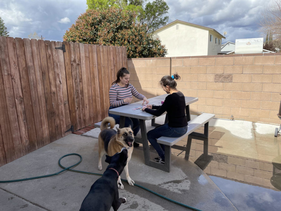 Lauren Rodriguez and Linnea Chandler play in Linnea's backyard. They are laughing with the dogs playing and enjoy spending time together.